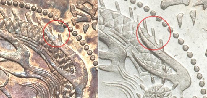 大竜と小竜の違い